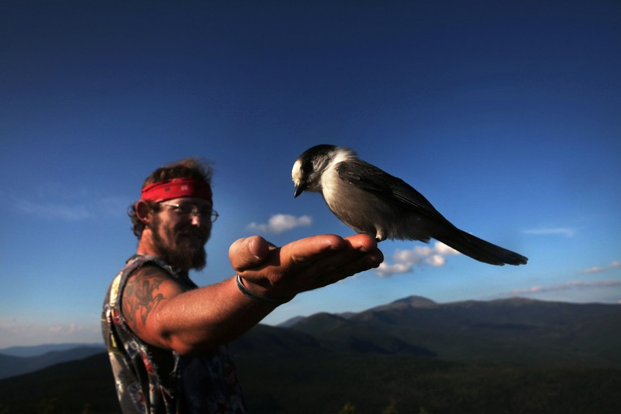 wes bearbait mayeux holds his hand out for a grey jay to landon in the white mountains of new hampshire along the appalachian trail