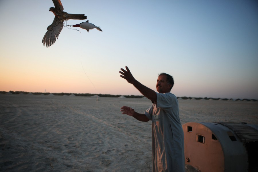 Ibrahim Ali Shams eleases a falcon on a tether to serve as bait and attract other falcons to his traps on a desert island of the coast of Abu Dhabi, United Arab Emirates.