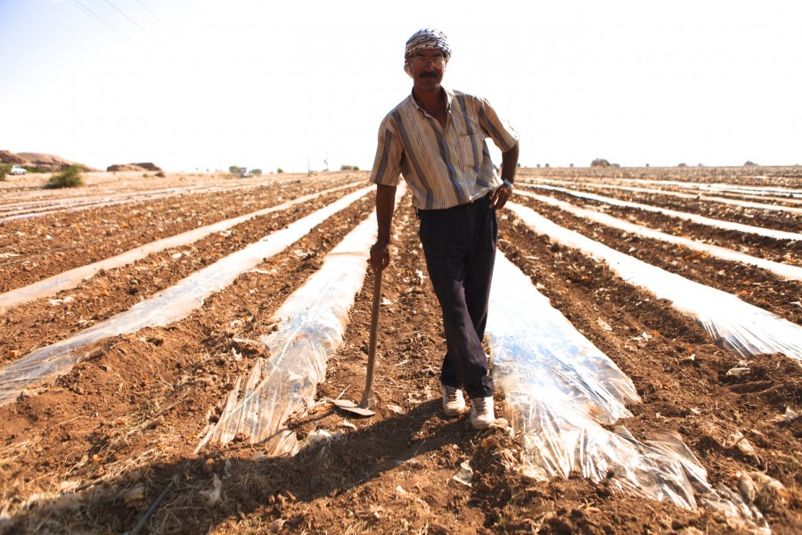 A man stands in a farm field that he is preparing for irrigation and crops during the dry summers along the Jordan River in Palestine.
