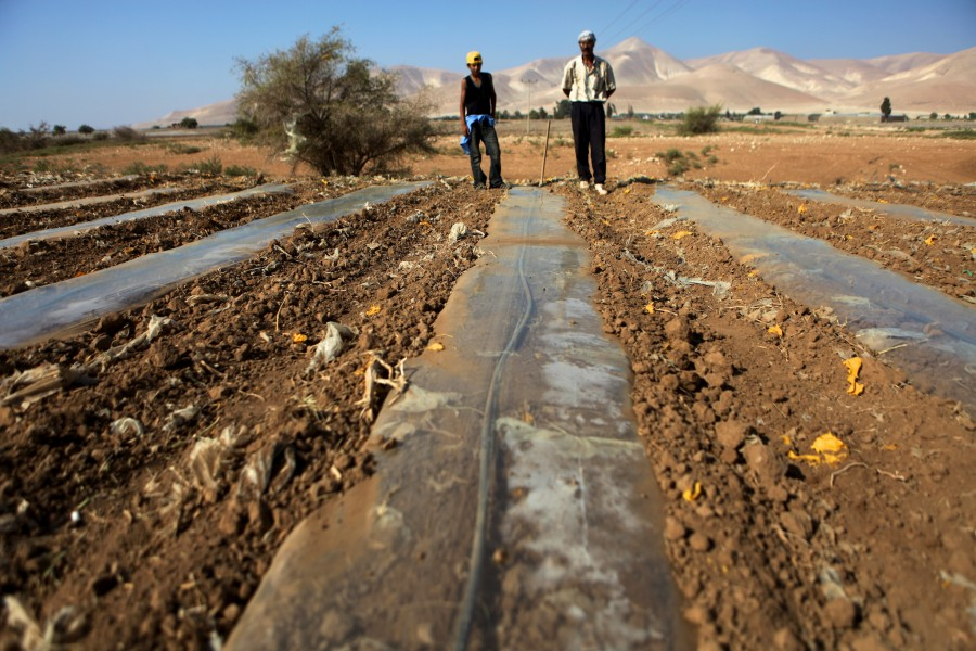 Father and son stand together in a feild in Palestine as they work to lay irrigation pipes